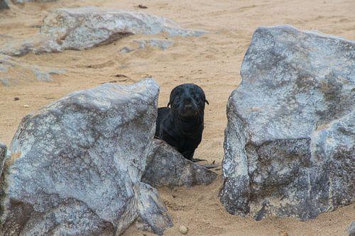 Hij komt net kijken, baby pelsrob bij Cape Cross