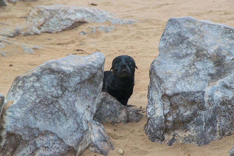 Hij komt net kijken, baby pelsrob bij Cape Cross van Rietje Bulthuis
