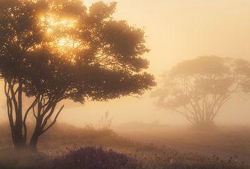 Het Gouden Krentenboompje van Joris Pannemans - Loris Photography