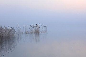 Stilte von René Vos