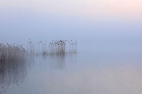 Stilte van René Vos