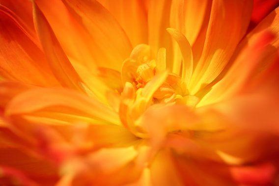 Flaming petals van LHJB Photography