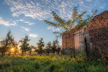 Abgelaufener Schuppen (Ruine) in Obstplantage von Moetwil en van Dijk - Fotografie