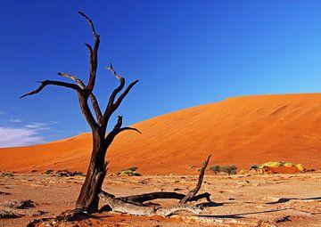 Dead Vlei Namibia van W. Woyke
