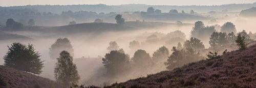 Panorama van een mistige morgen op de paarse Posbank van