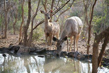 Deers von Ron Dijkstra