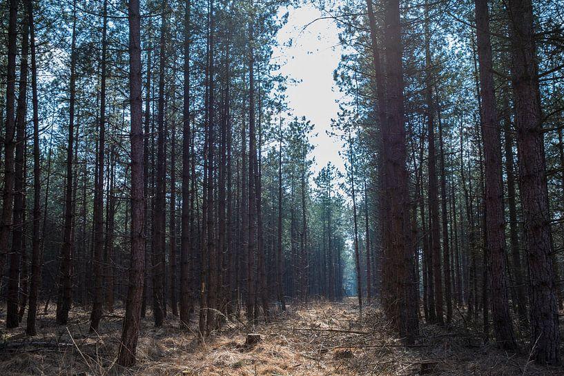 Brabants Bos in de lentezon van Marcia Kirkels
