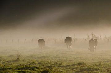 Koeien in de mist van Hans Peter Debets