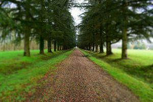 Weg door het bos van Thijs BEUMER