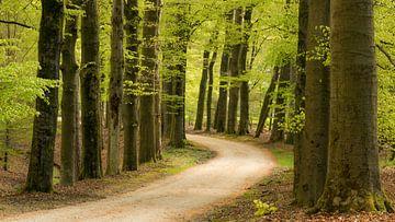 bos 2 van Maja Ooms