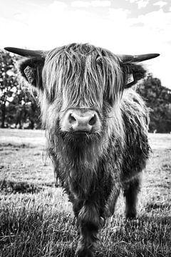 Schottischer Highlander Schwarzweiß von Tineke Oving