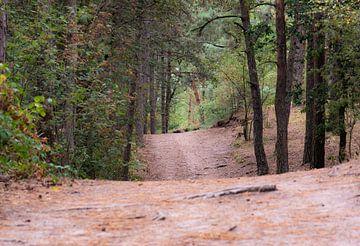 haut et bas dans la forêt sur Tania Perneel