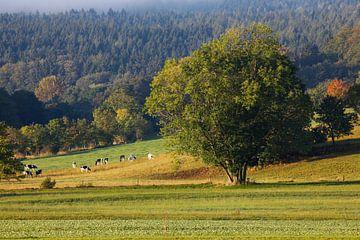 Landschaft in der Oberlausitz van Thomas Jäger