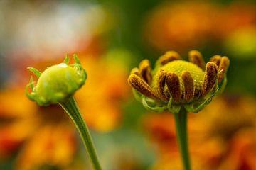 Blume von Sabine Claus