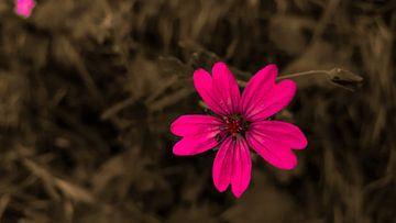 Blume allein von Jenny Heß