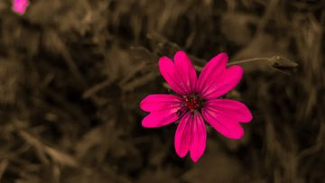 Flower only van Jenny Heß