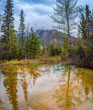 Paint Pots in Kootenay National Park, Kanada von Rietje Bulthuis