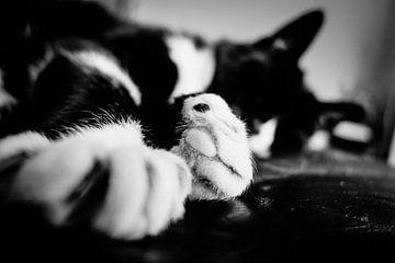 Puss in boots von Maurice Weststrate