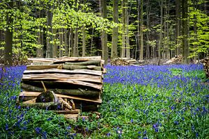 Opgestapeld hout in het Hallerbos van Jeffrey Van Zandbeek