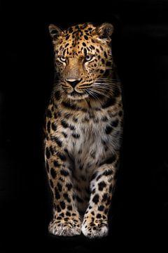 Slender große Katze Leopard steht gerade und schaut fragend in der dunklen isolierten schwarzen Hint von Michael Semenov