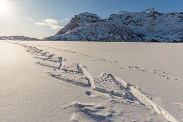 Sporen van langlaufski's in zonnig sneeuwlandschap van Sander Groffen