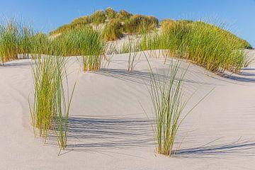 Sanddünen mit Dünengras auf Terschelling von Henk Meijer Photography