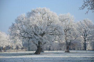 Winter Bäume von Corinna Vollertsen