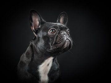 Bulldog van