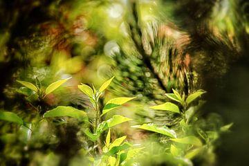 Jonge lentebladeren van Nicc Koch