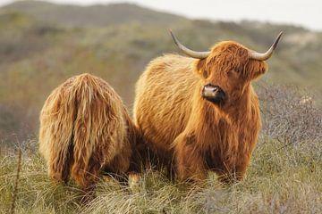 Wildtiere von Dirk van Egmond
