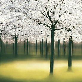 Springlight sur Lars van de Goor