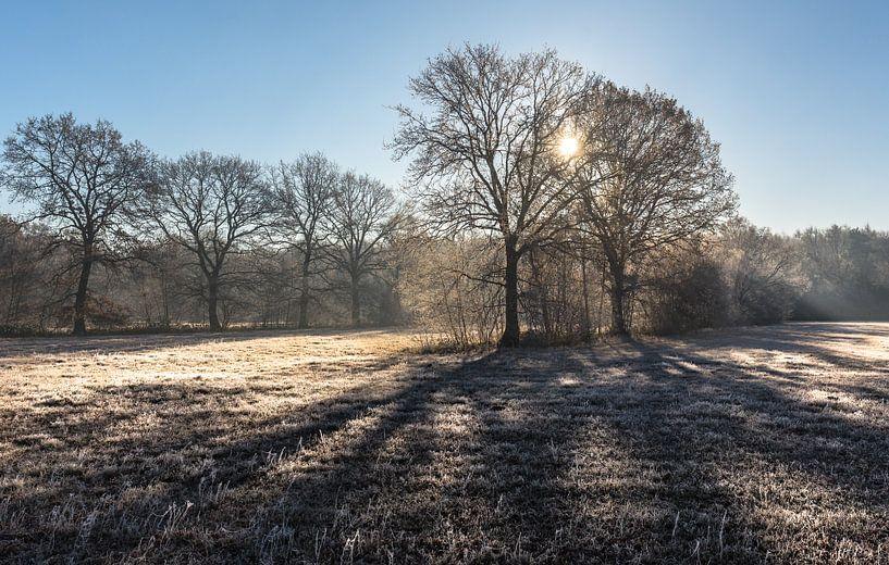 Winterprikkels van Boris de Weijer