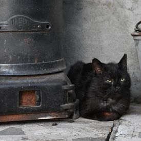 Zwarte kat bij zwarte kachel op black friday sur Gonnie van Hove