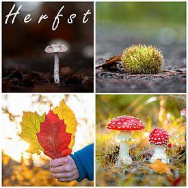 Der Herbst! von Justin Sinner Pictures ( Fotograaf op Texel)
