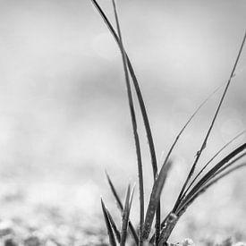 Herbe en noir et blanc sur Miranda van Hulst