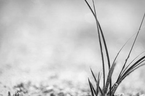 Herbe en noir et blanc