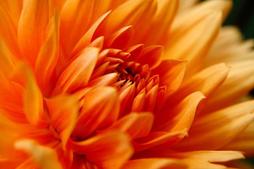 Close up bloem van Thijs Schouten