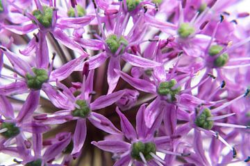 Close up Paarse bloem van Noud de Greef