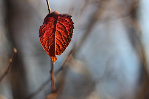 The Red Leaf van Cornelis (Cees) Cornelissen