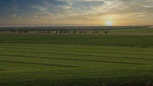 Pferde von By Foto Joukje