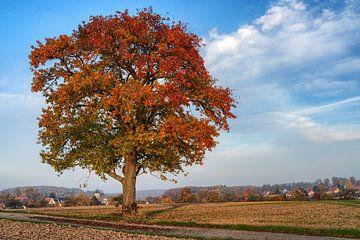 Oude appelboom aan de kant van de weg in de herfst van Uwe Ulrich Grün