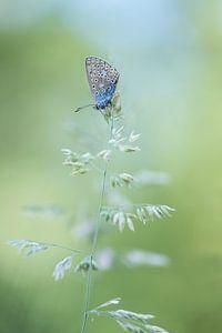 Vlinder ontwaakt.