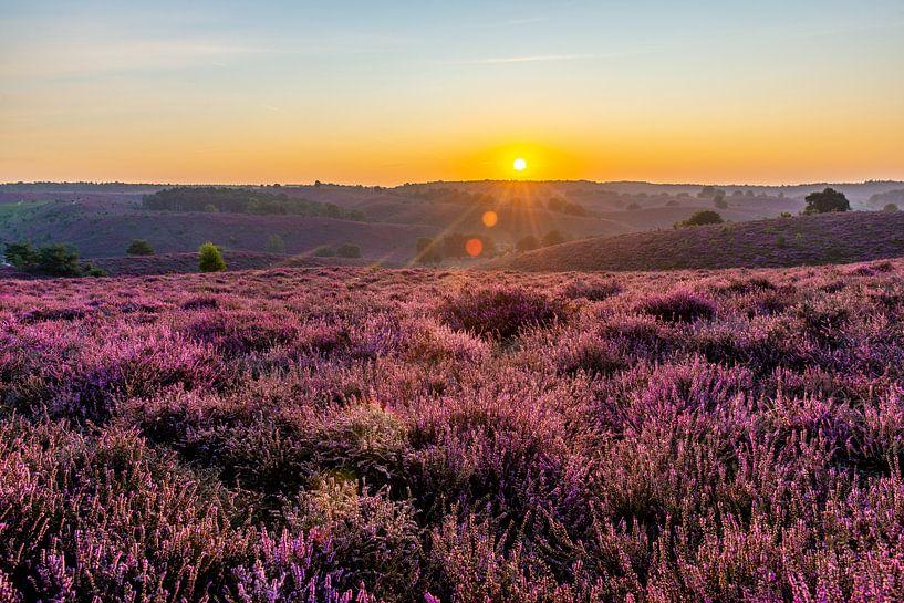 Zonsopgang bloeiende paarse heide op de Posbank van Marco Schep