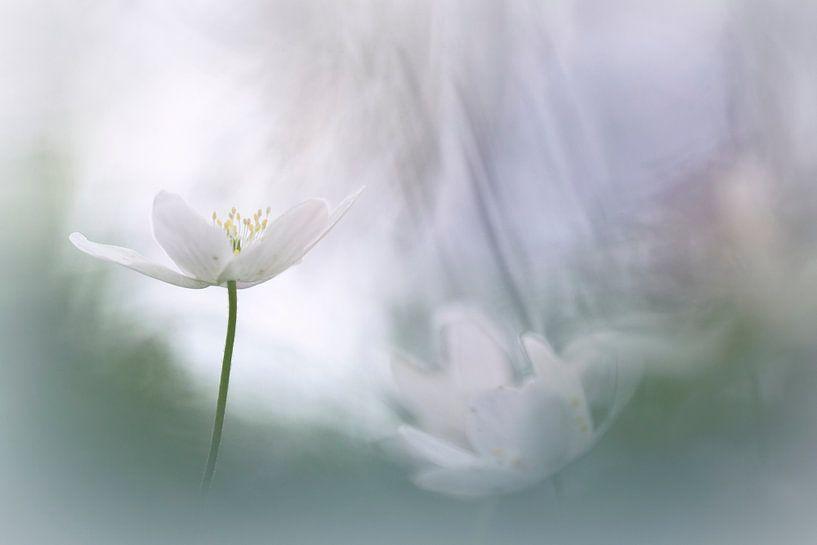 Spiritual van Bob Daalder