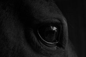 Paardenoog van