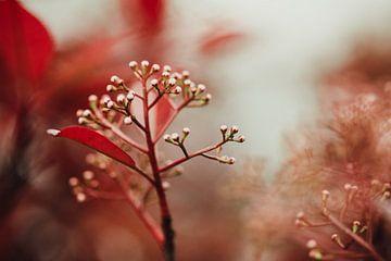 Red Bulps van Hiske Boon