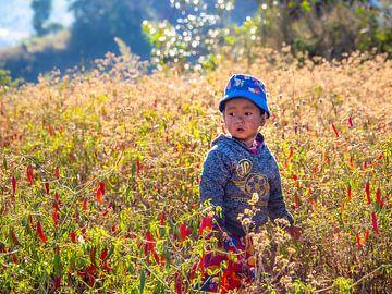 De peper jongen van Kalaw in Myanmar van Rik Pijnenburg