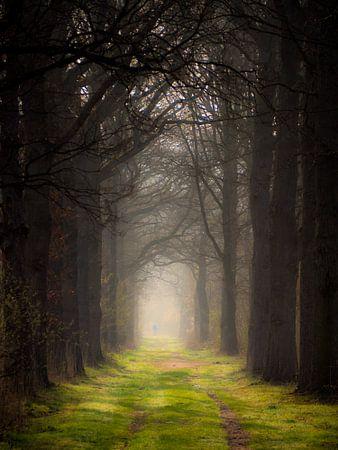 Ein Märchenwald von Lex Schulte