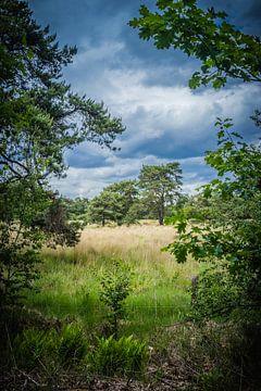 Heidelandschaft in den Niederlanden mit schönen Wolken im Hintergrund. von Henk Van Nunen