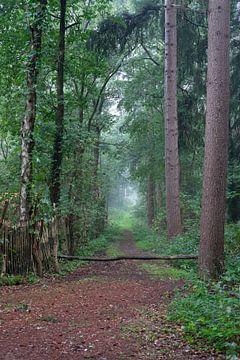 Ingang naar het bos van Jos Venes